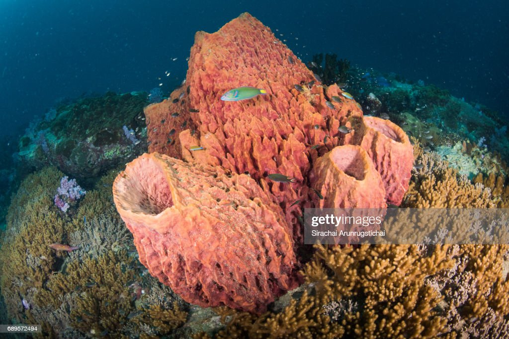 Coral reef scene with barrel sponge : Stock Photo