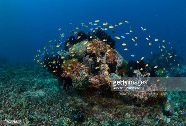 coral reef scene with schooling anthias - 熱帯魚 ストックフォトと画像