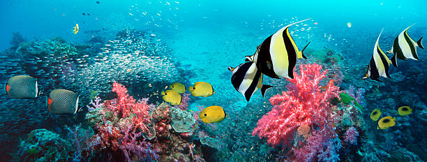 Coral reef scenery panorama with tropical fish