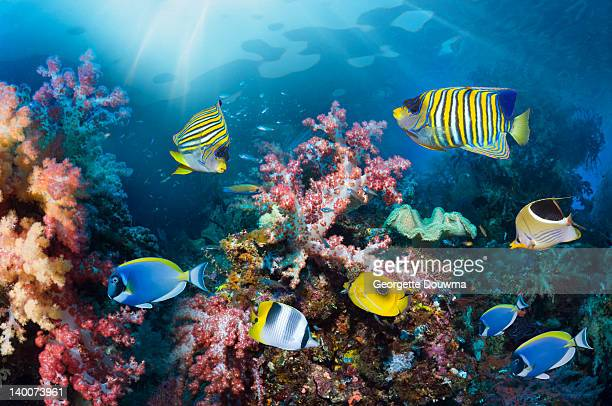 coral reef scenery - raja ampat islands stock photos and pictures