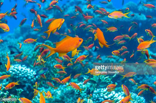 coral reef scenery - 熱帯魚 ストックフォトと画像