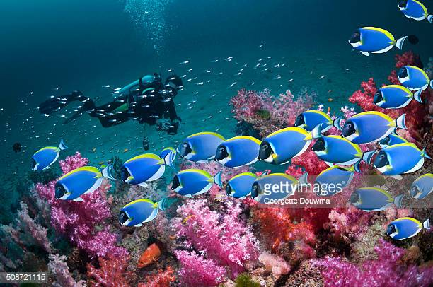 Coral reef scenery with fish and diver