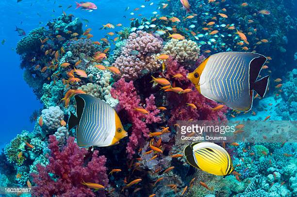 coral reef scenery with fish - soft coral stock pictures, royalty-free photos & images