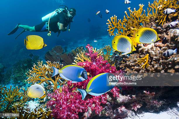 coral reef scenery with male scuba diver watching - fonds marins photos et images de collection