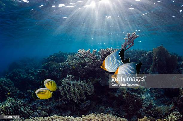 Coral reef scenery with shafts of sunlight