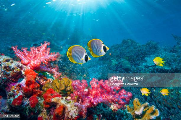 coral reef scenery with tropical fish - reef stock pictures, royalty-free photos & images