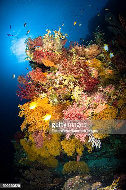 Coral reef seascape, Australia.