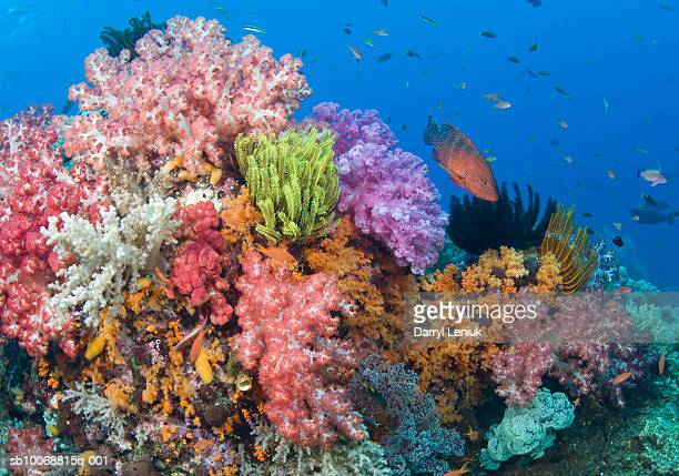 coral reef, uderwater view - raja ampat islands stock photos and pictures