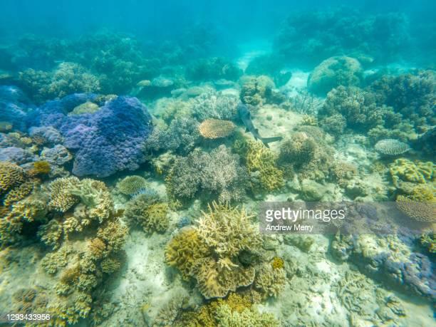 coral reef underwater, great barrier reef - スクーバダイビングの視点 ストックフォトと画像