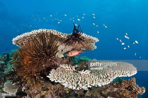 Coral Reef Wakaya Lomaiviti Fiji