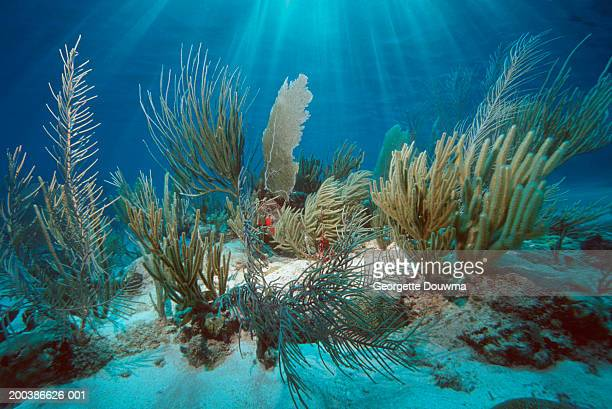 coral reef with gorgonians and soft corals (digital composite) - fondale marino foto e immagini stock