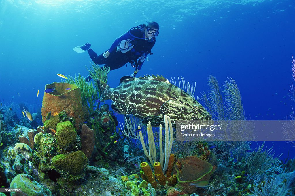 Coral reef with scuba diver : Stockfoto