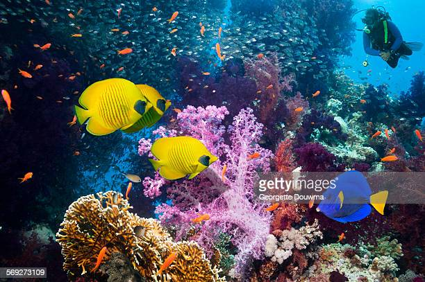 Coral reef with tropical fish and a diver