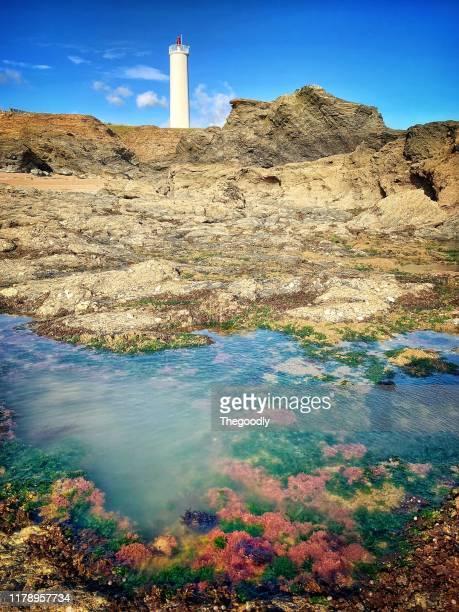 coral rock pool in front of grosse terre lighthouse, saint-hilaire-de-riez, vendee, france - front view photos et images de collection