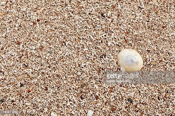 Coral sand, Mannin Bay, Ballyconneely, Connemara, County Galway, Republic of Ireland, Europe
