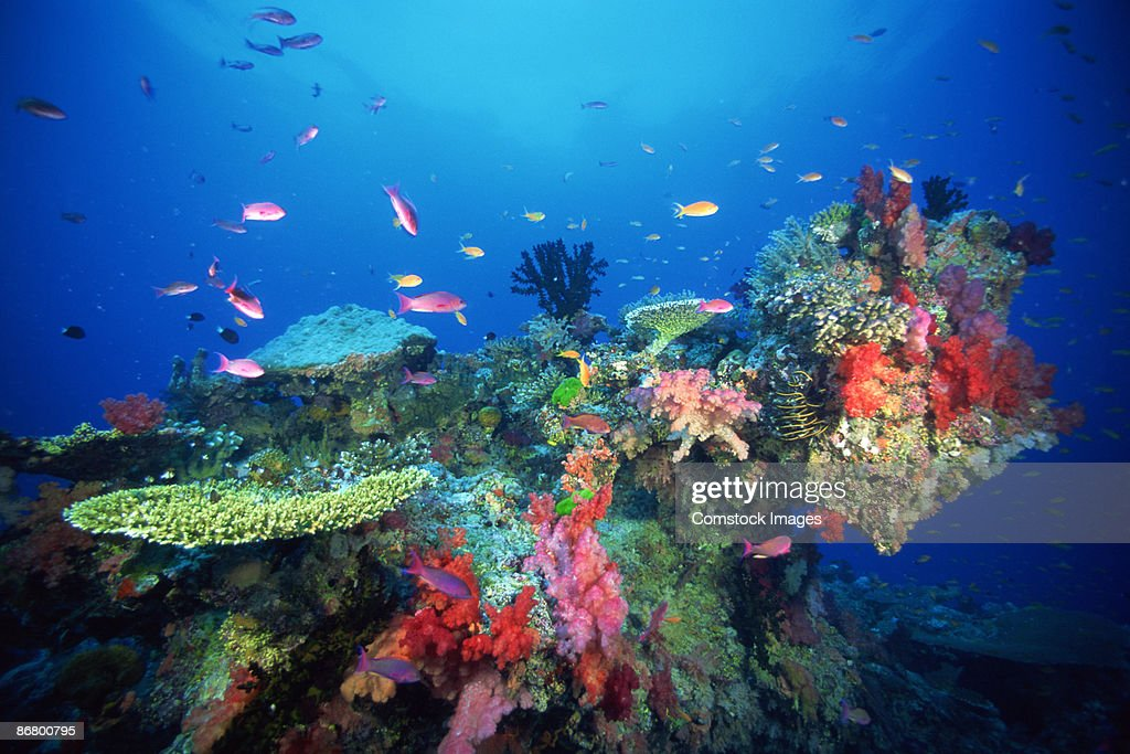 Coral , sea fans , and fish : Stock Photo