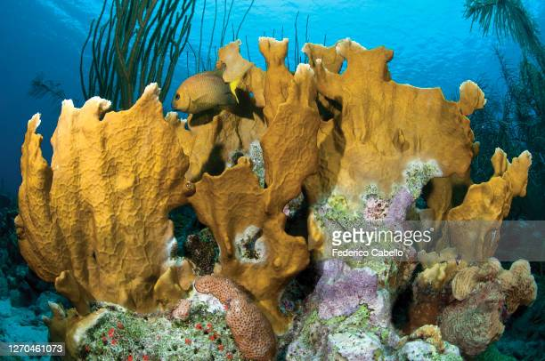 coral sea, klein bonaire - klein stock pictures, royalty-free photos & images
