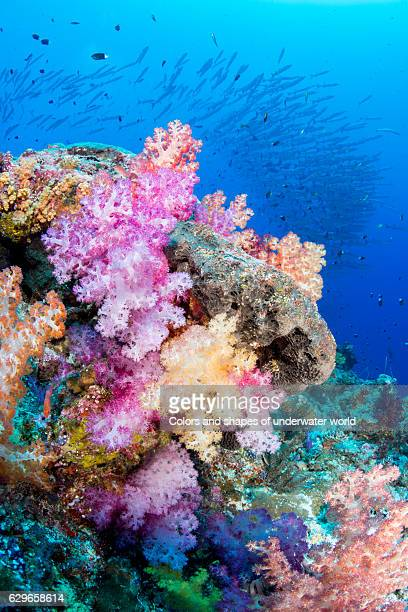 corals and arrows - soft coral stock pictures, royalty-free photos & images