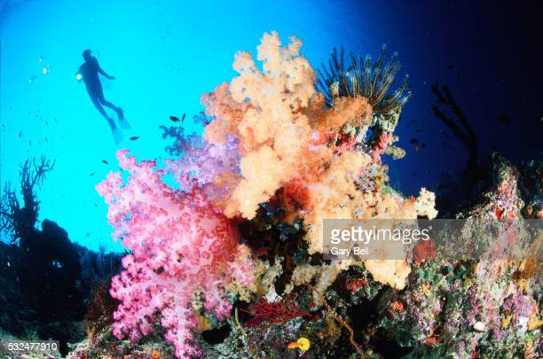 Corals and diver in the background
