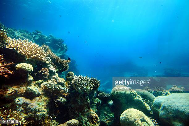 corals deep in the sea - reef stock pictures, royalty-free photos & images