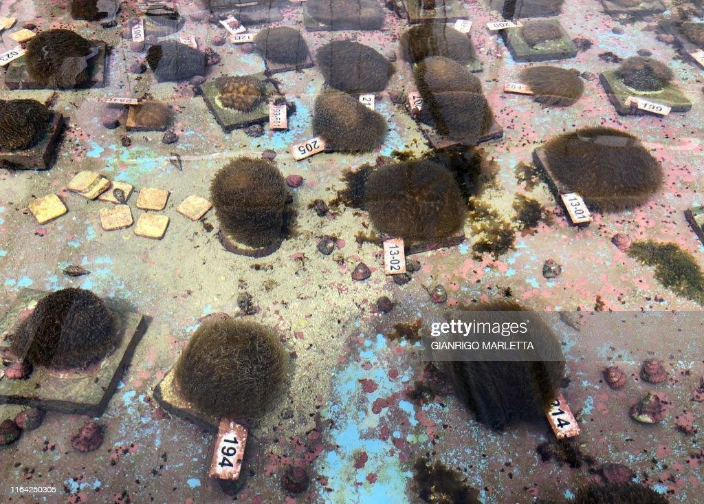 TOPSHOT-US-ENVIRONMENT-SCIENCE-OCEANOGRAPHY-CORAL-FLORIDA : News Photo