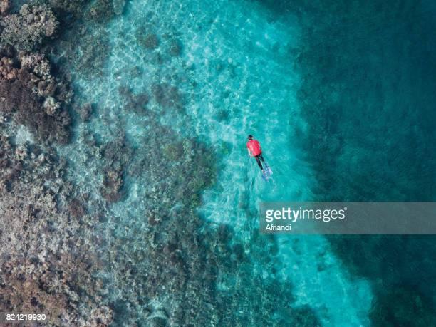 Corals of Gili Lawa, Komodo Island