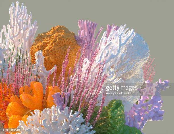 corals - coral colored stock pictures, royalty-free photos & images