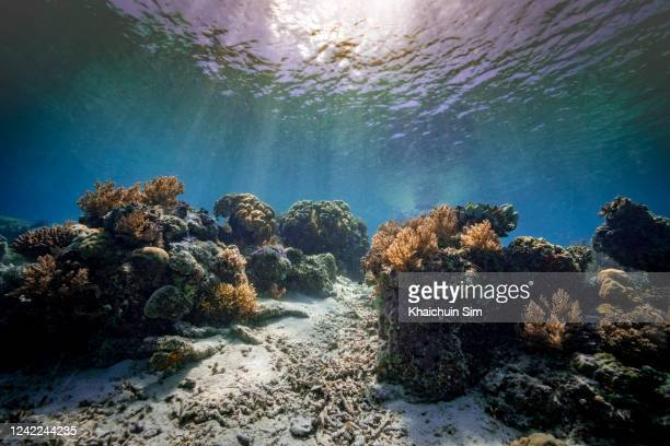 corals underwater - ocean floor stock pictures, royalty-free photos & images