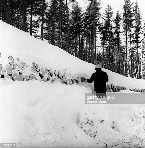 Cord wood covered with snow waiting for spring United States circa 1950 Abbott took two series of logging photographs the first in the High Sierra...