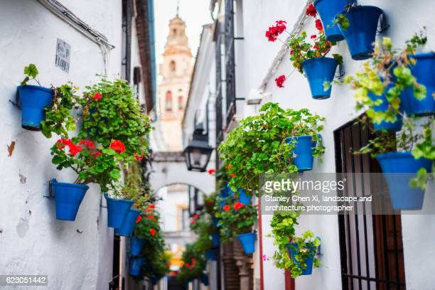 Cordoba, Street of Flowers