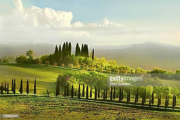 Coreografia toscana--choreography Tuscany