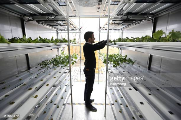 Corey Ellis chief executive officer of the Growcer Inc inspects plants at the Bayview Yards innovation center in Ottawa Ontario Canada on Wednesday...