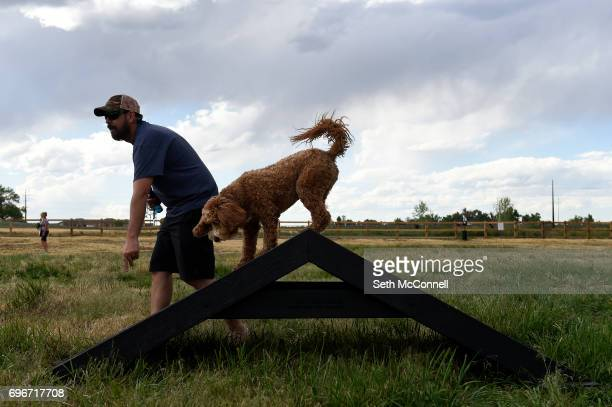 Corey West gives his dog Easton a command as he climbs on an obstacle at USMC CPL David M Sonka Dog Park on June 14 in Parker Colorado The Town of...