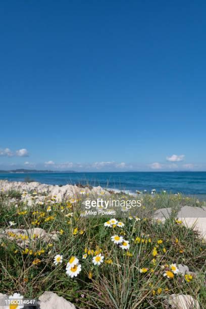 corfu coastal landscape greece - chamomile tea stock photos and pictures
