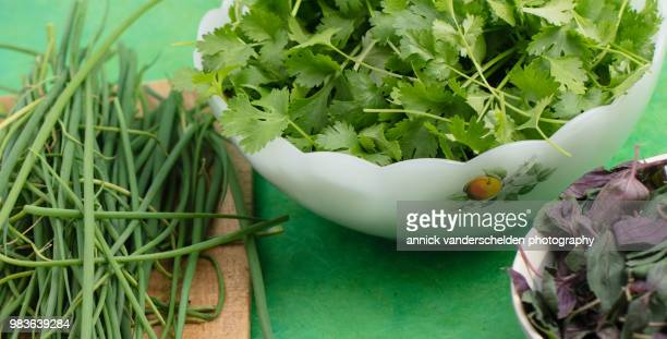 Coriander, chives and Ocimum basilicum 'Magic Mountain'