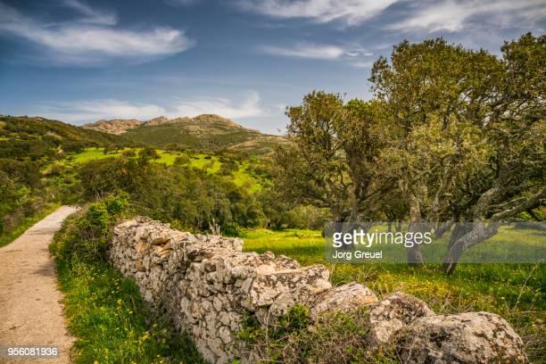 cork oaks in springtime - stone wall foto e immagini stock