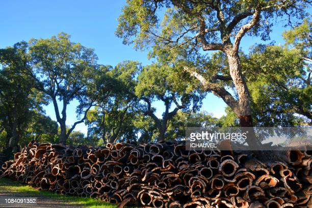 cork stock algarve portugal - cork material stock photos and pictures