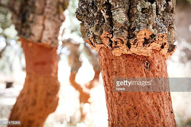 cork tree farming - cork tree stock photos and pictures