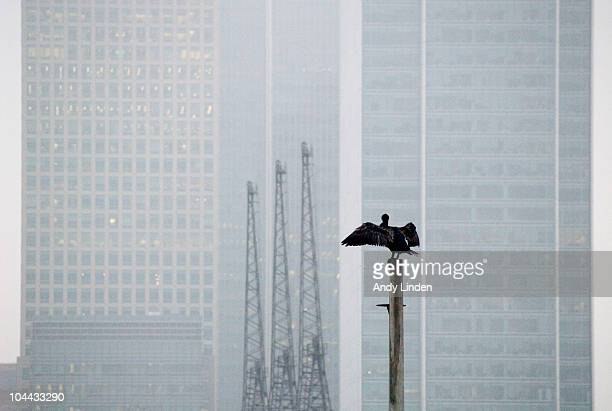 Cormorant, Cranes & Canary Wharf