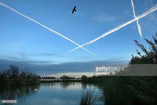A cormorant flies over a portion of the Sepulveda Basin in Van Nuys untouched by the Los Angeles District Army Corps of Engineers on December 28 2012...