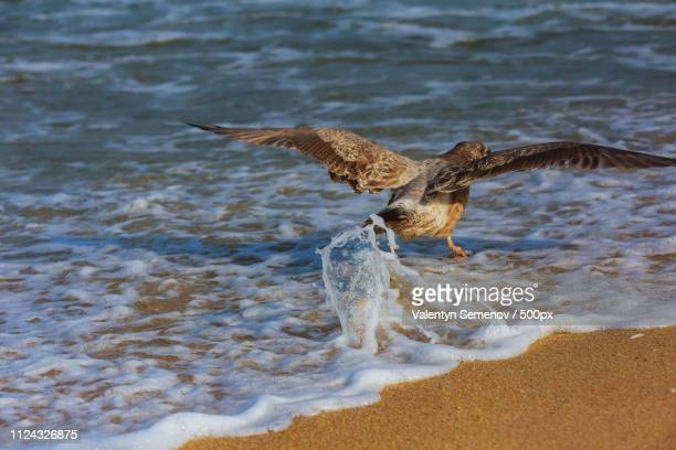 a cormorant fly over the ocean surface. blue sky background - benedetto photos et images de collection