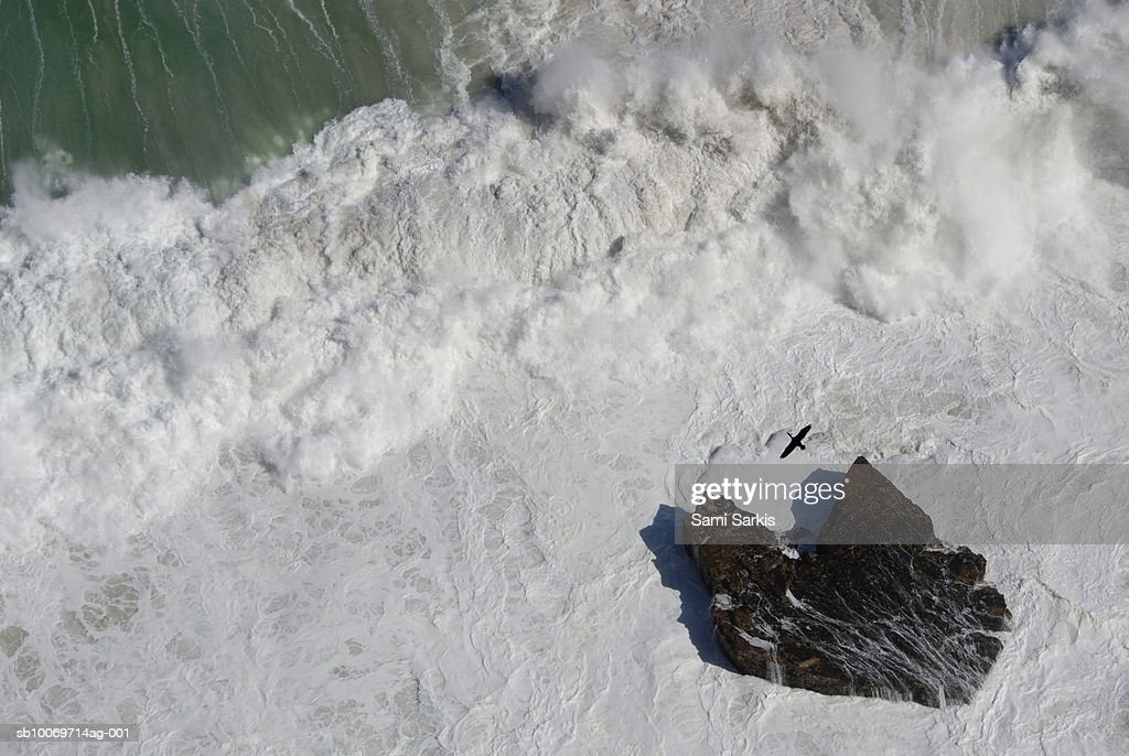 Cormorant flying over heavy waves and rock : Stock Photo