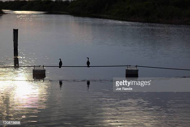 Cormorants are seen in a canal in the Florida Everglades on August 11 2011 in the Everglades National Park Florida The Obama administration announced...