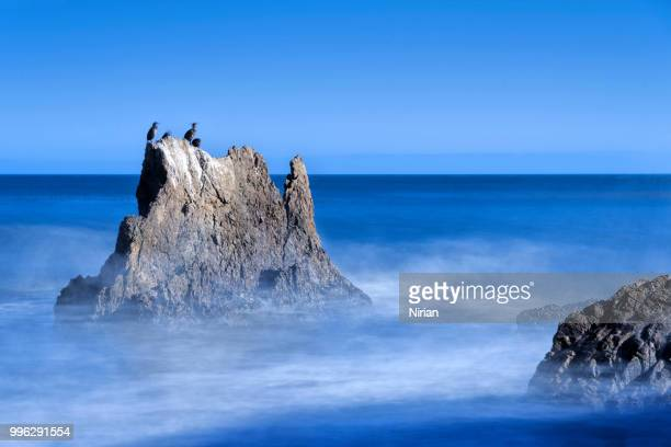 cormorants on the rock - malibu beach stock pictures, royalty-free photos & images