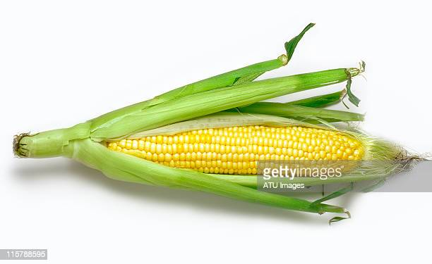 Corn and husk
