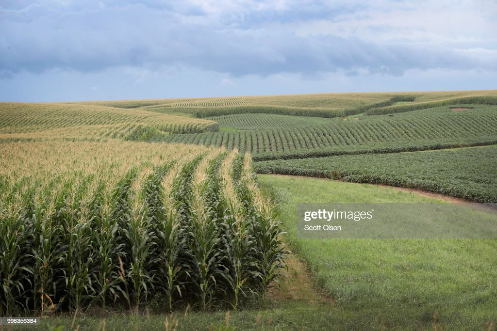 Corn and soybeans grow on a farm on July 13, 2018 near Tipton, Iowa. Farmers in Iowa and the rest of the country, who are already faced with decade-low profits, are bracing for the impact a trade war with China may have on their bottom line going forward.