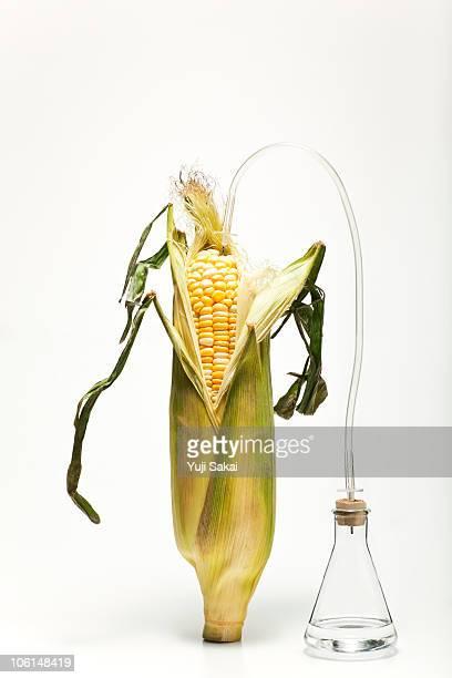 corn& bio fuel