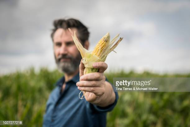 corn cob in the hand of the farmer - tina terras michael walter stock-fotos und bilder