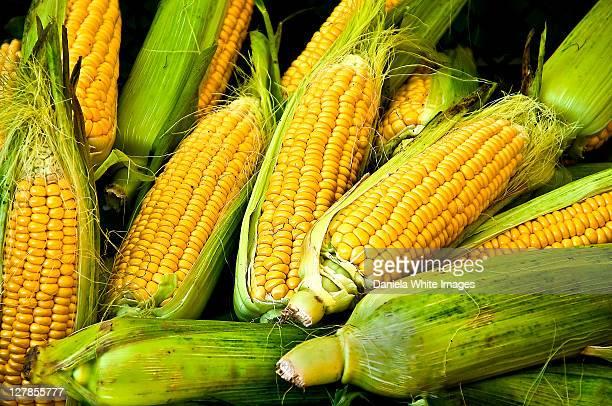 corn cob - corn cob stock photos and pictures