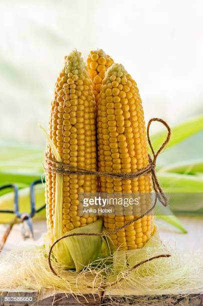 corn cobs - aniko hobel stock pictures, royalty-free photos & images